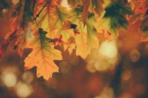 November eUpdate